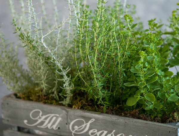 Flowers Rosemary and Thyme