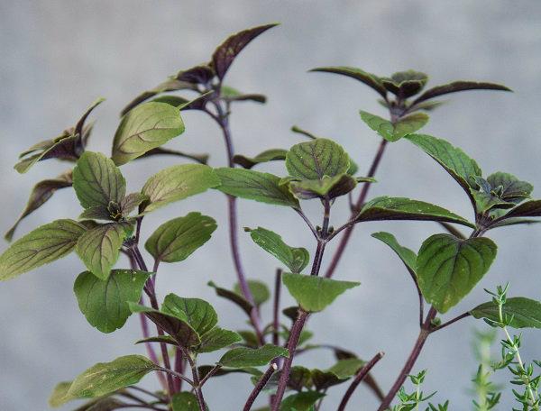 Flowers Herbal Tray