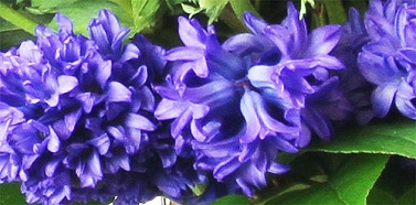 Blues of Spring