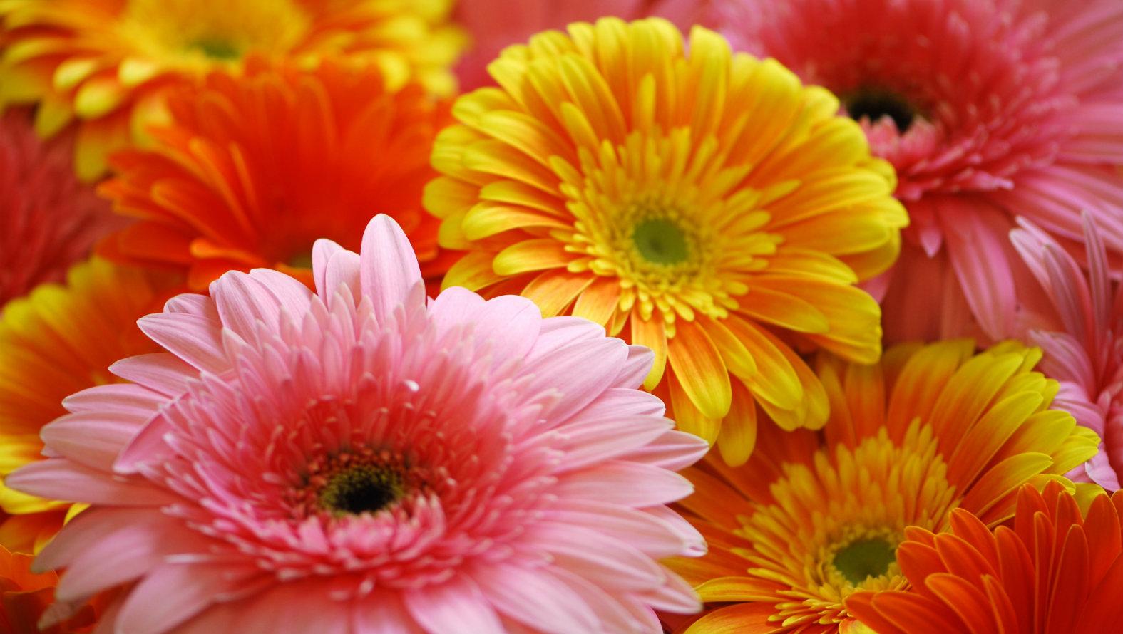 gerbera-bouquet.jpg