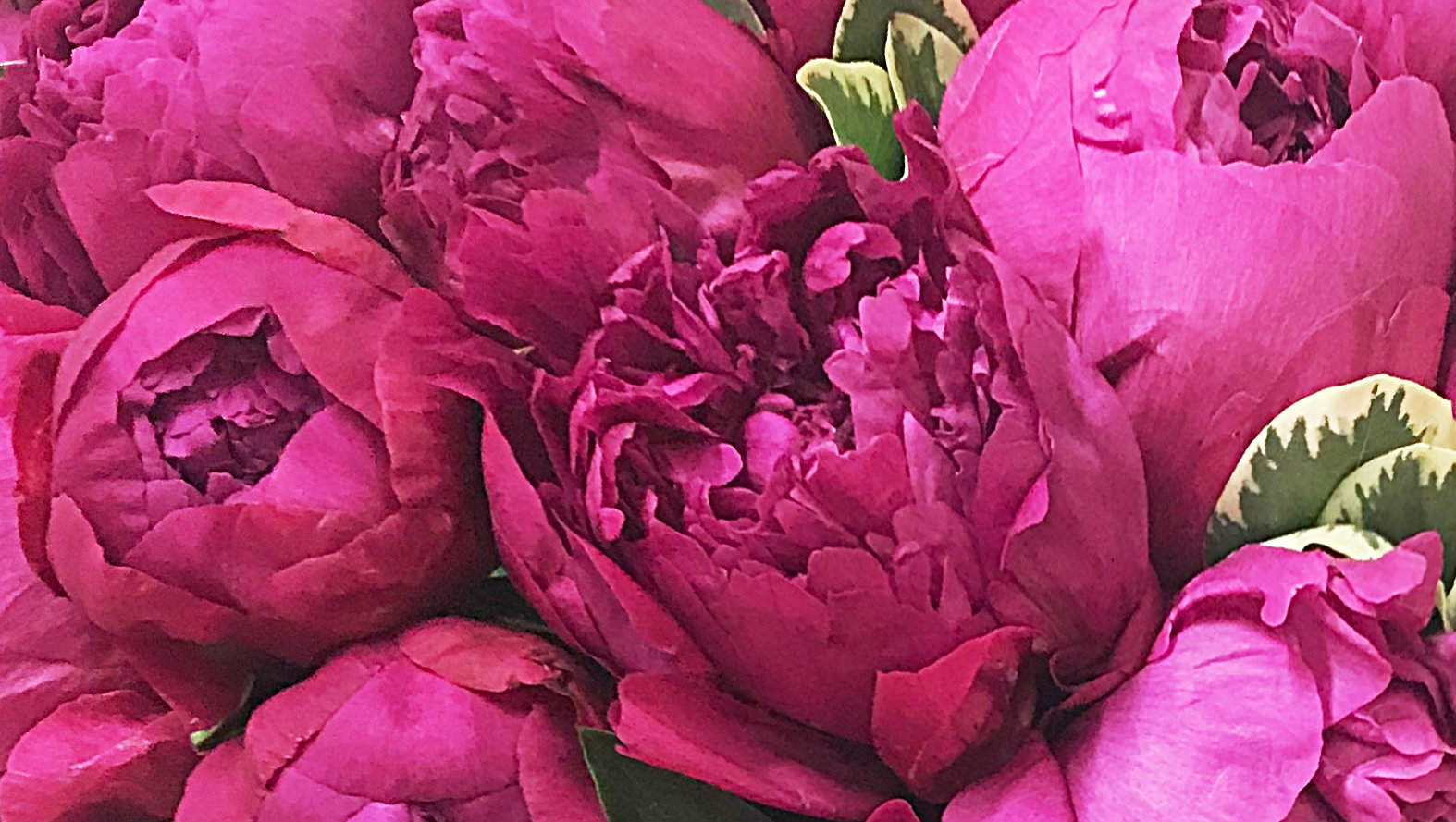 purple-peonies.jpg