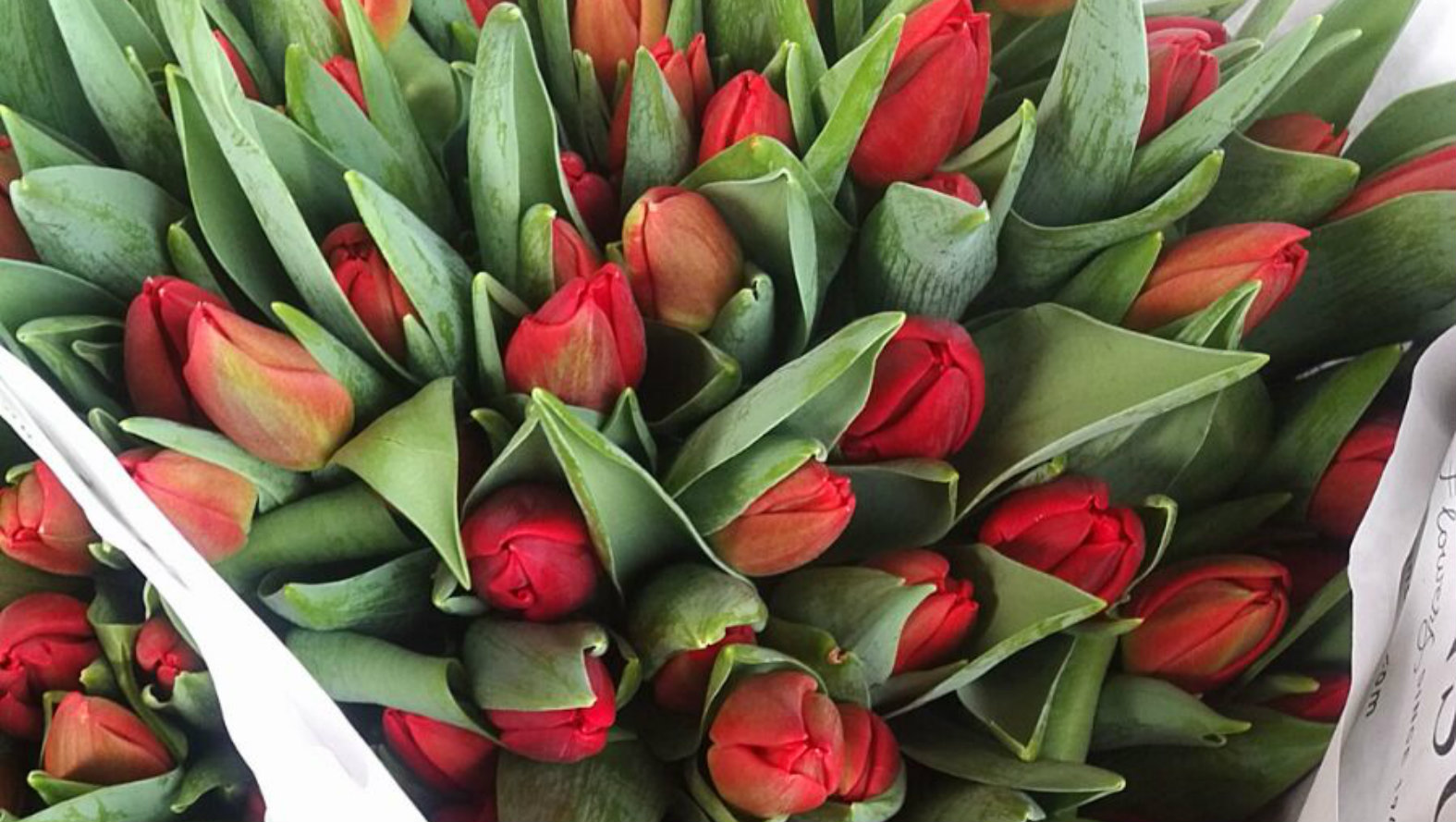 Red tulips bouquet tulips delivery london uk flower station red tulips bouquet izmirmasajfo Gallery