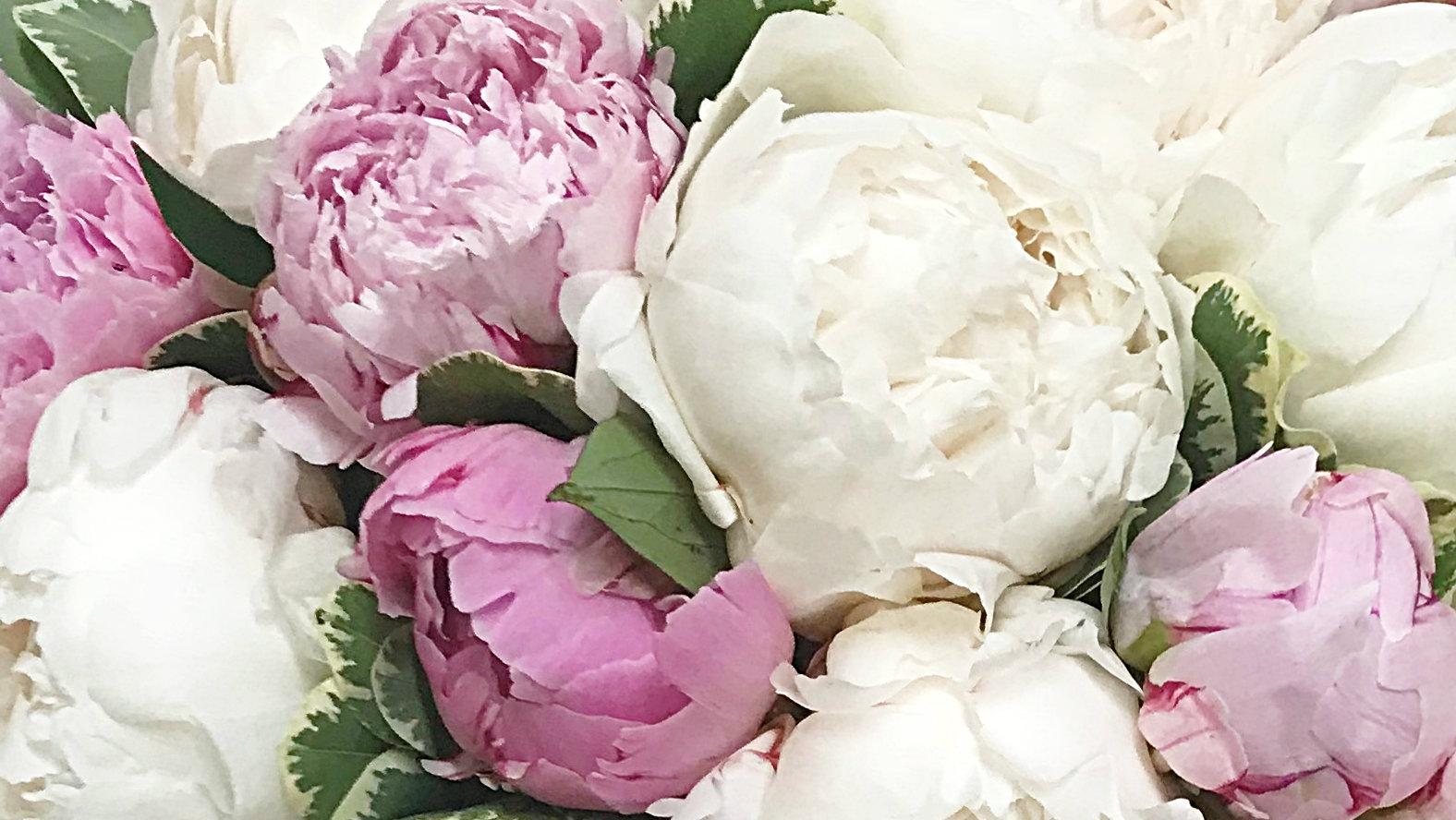 white-and-pink-peonies.jpg