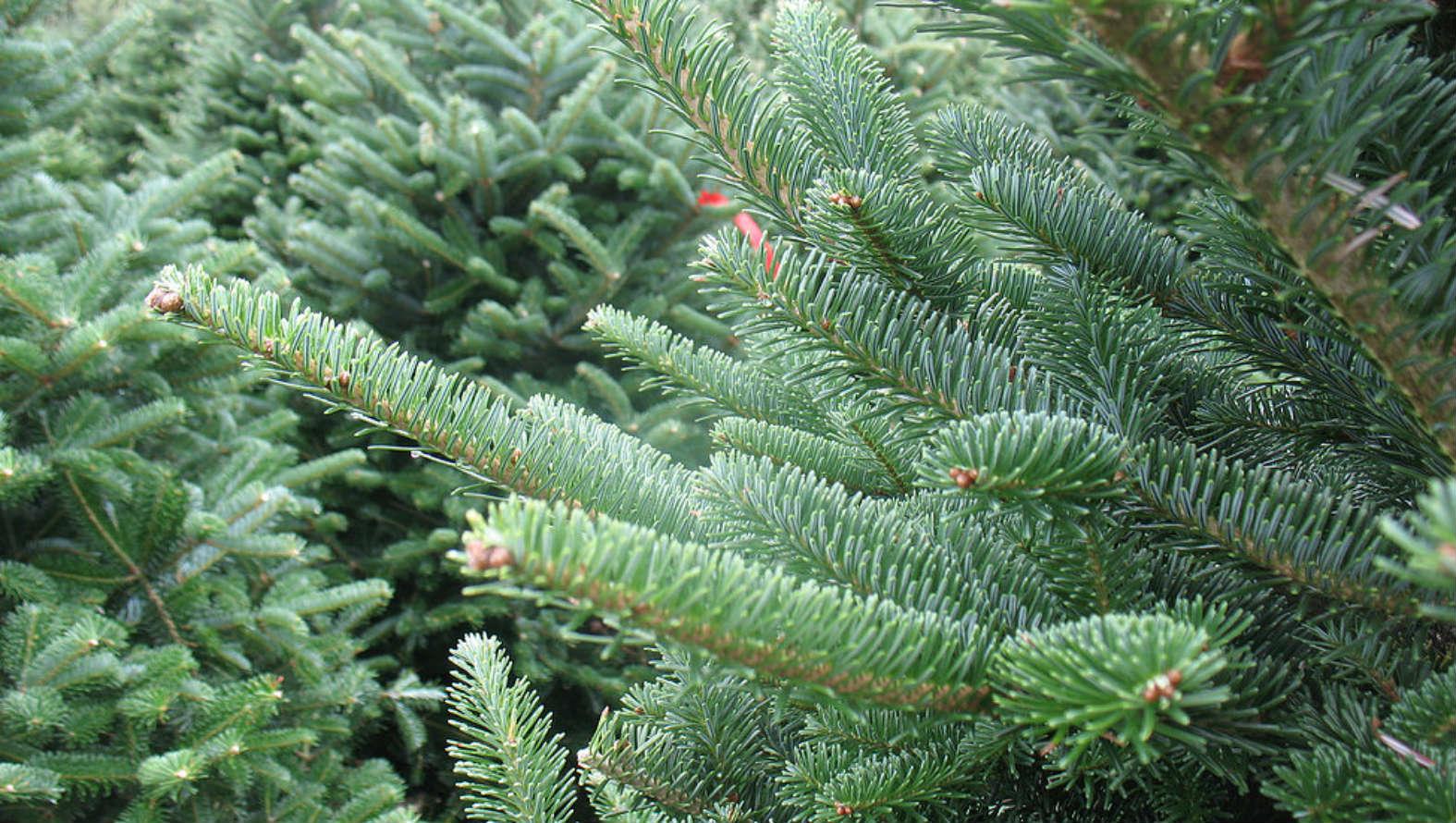 xmas-tree.jpg